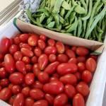 トマトとインゲン