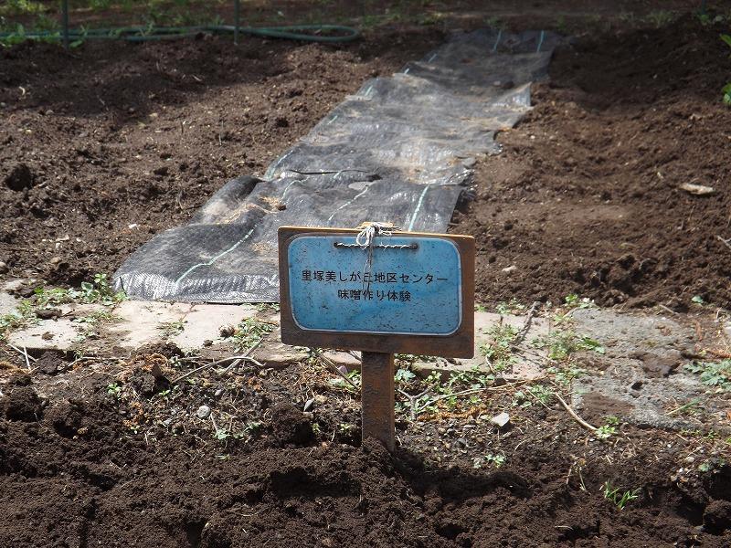 大豆プロジェクト